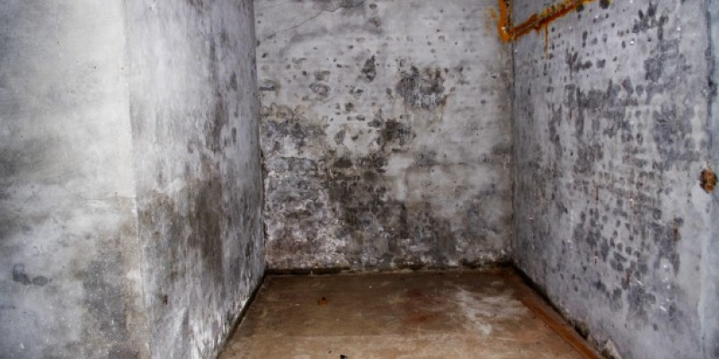 Mould and mildew in damp basements and cellars can be an issue in older properties.